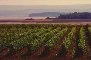 Blomidon Winery