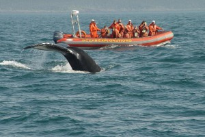 Zodiac Whale Watching